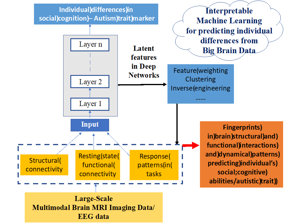Interpretable Machine Learning Aided Understanding Complex Brain Structural and Functional Interactions Underlying the Spectra of Individual Differences in Cognitive Behavior